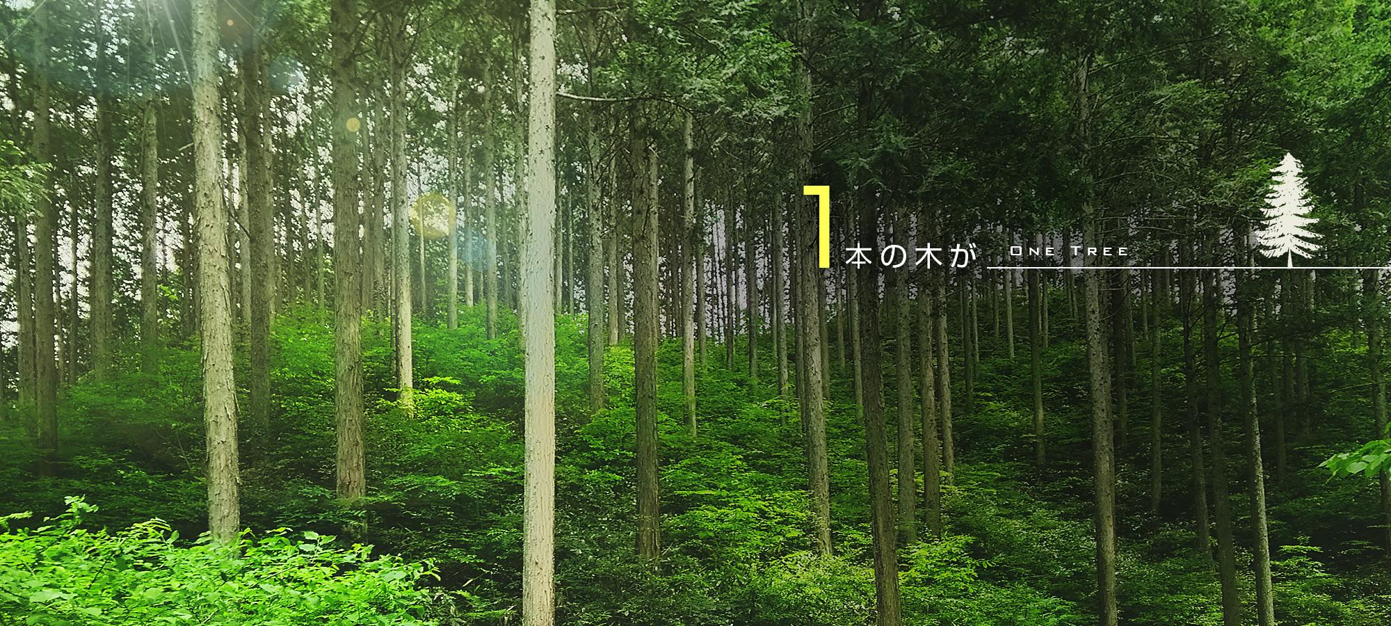 1本の木が