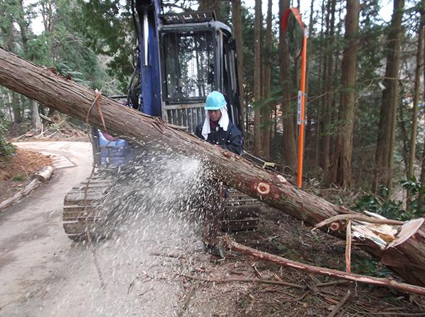 間伐と皆伐・再造林。<br>2WAYで進める施策