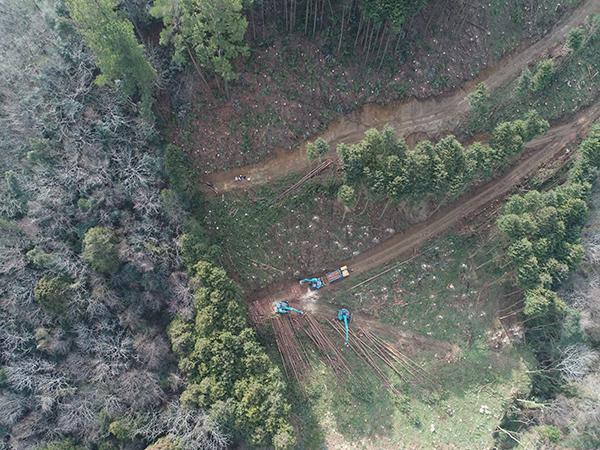皆伐再造林