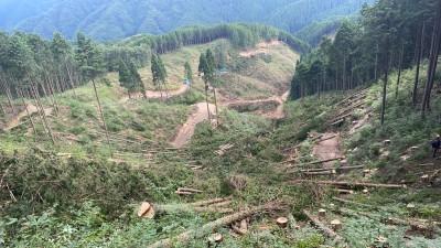 新庄村伐採 2021.9